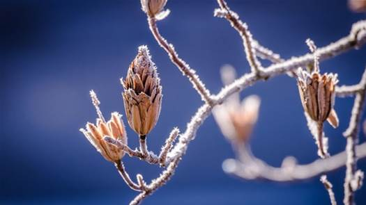 The US is getting more and more days without frost