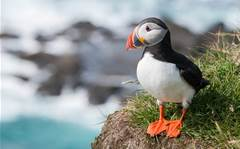 Puffins are donning sexy little sunglasses in the name of science